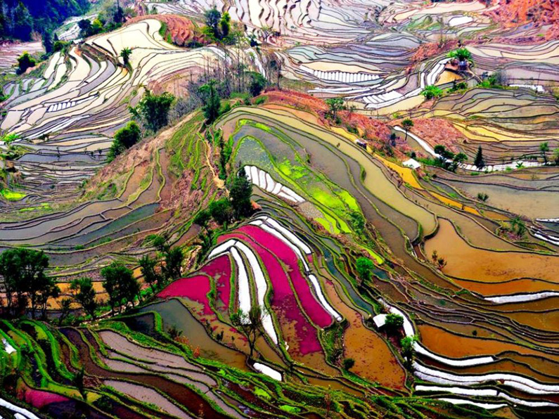 ?, Colored Rice Fields, Yunnan, China