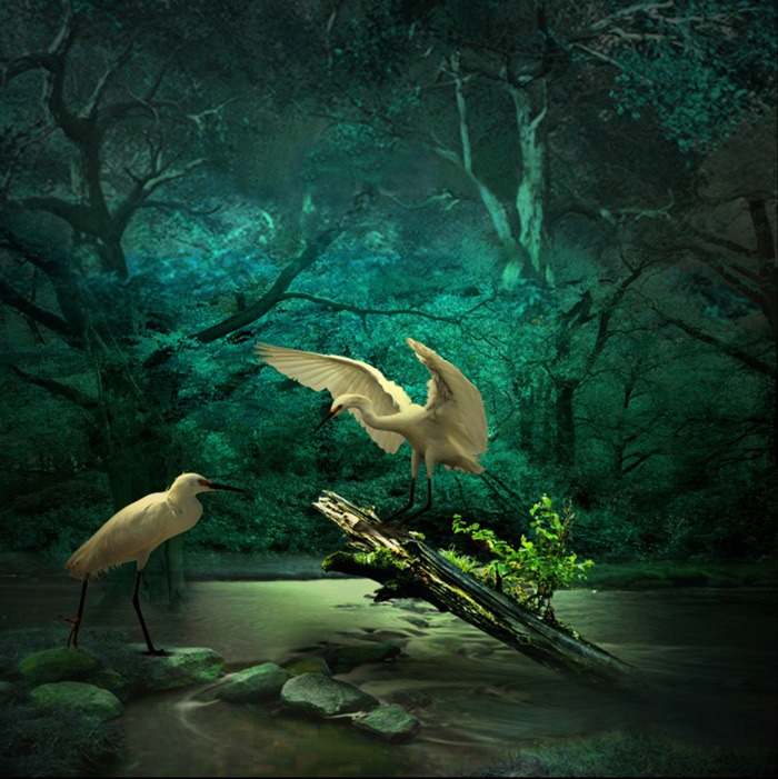 Jaci Lopes dos Santos, A River in the Forest (photomanipulation)