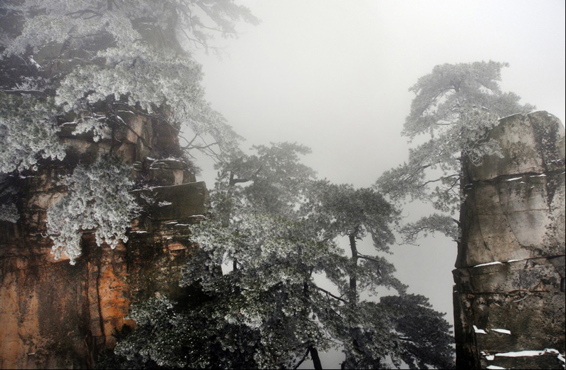 Melinde Chan, Snow Pine, Zhangjiajie World Geological Park, Hunan, China