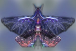 to Abstract ethereal Butterfly E11 (by Johan Framhout)